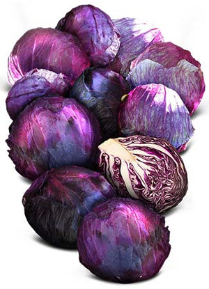 Mammoth Red Rock Cabbage Seeds (Brassica oleracea)