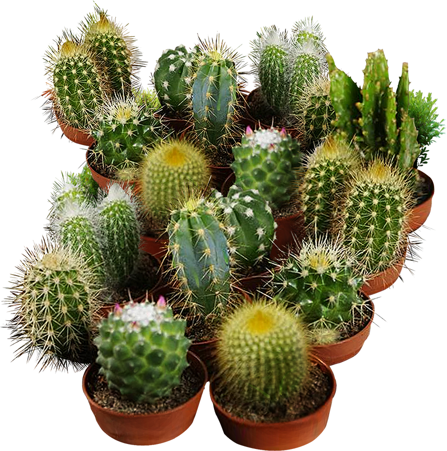 cactus seeds for planting