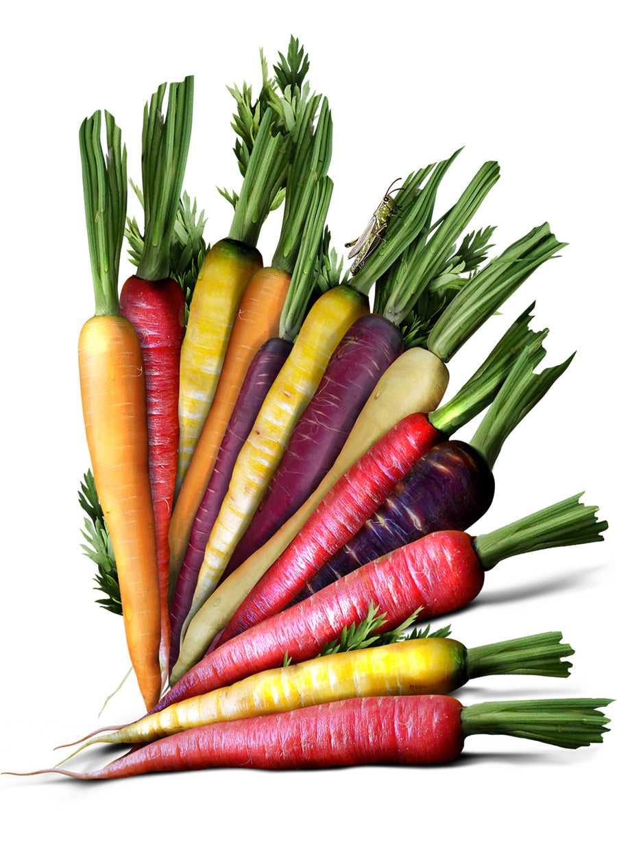 Rainbow Carrot Seeds