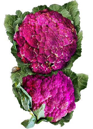 Purple Sicily Cauliflower Seeds