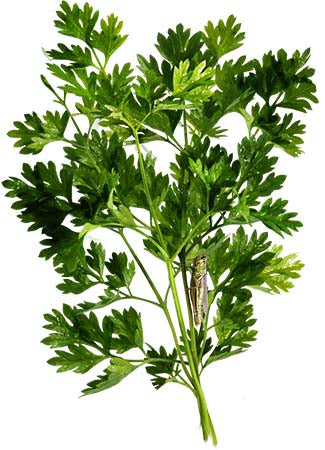 Chervil Herb Seeds (Anthriscus cerefolium)