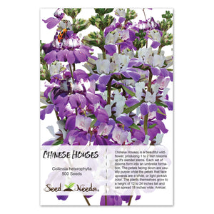 Chinese Houses Seeds (Collinsia heterophylla)