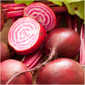 Chioggia Beet Seeds