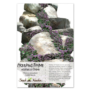Mother of Thyme, Creeping Thyme Seeds (Thymus serpyllum)