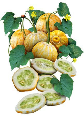 Lemon Cucumber Seeds (Cucumis sativus)