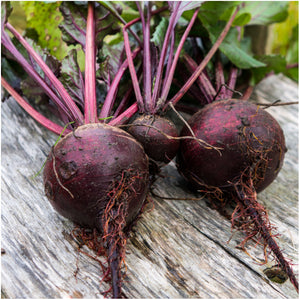 Dark Red Detroit Beet