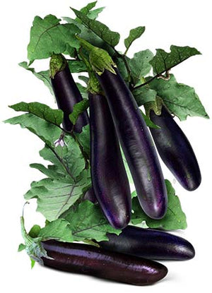 Long Purple Eggplant Seeds (Solanum melongena)