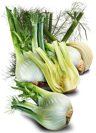 Florence Fennel Herb Seeds (Foeniculum vulgare)