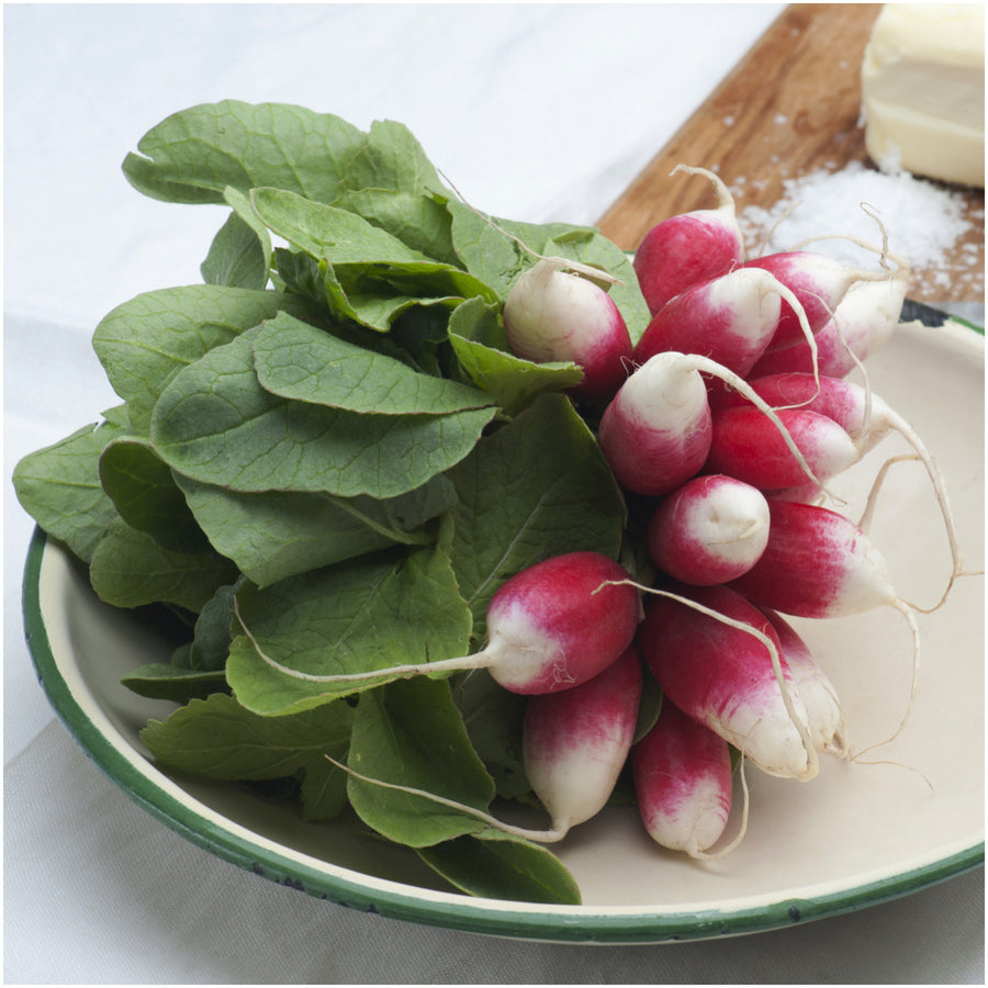 French Brekfast Radish
