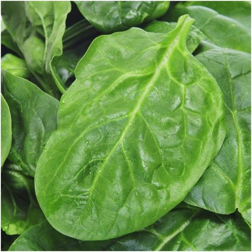 Giant Nobel Spinach