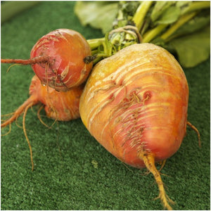 golden detroit beet