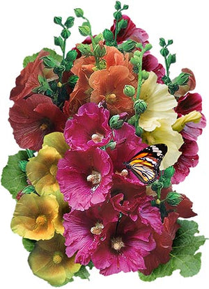 Single Hollyhock Mixture (Alcea rosea)