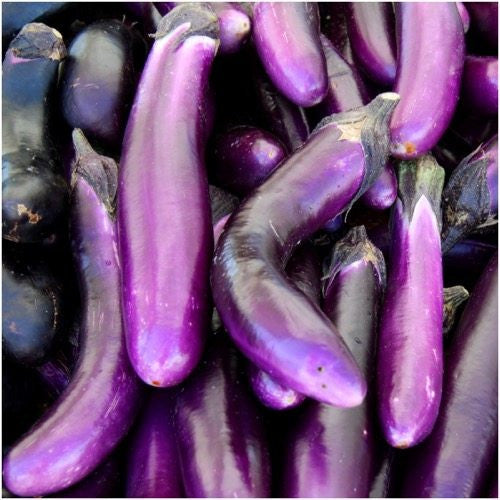 Long Purple Eggplant