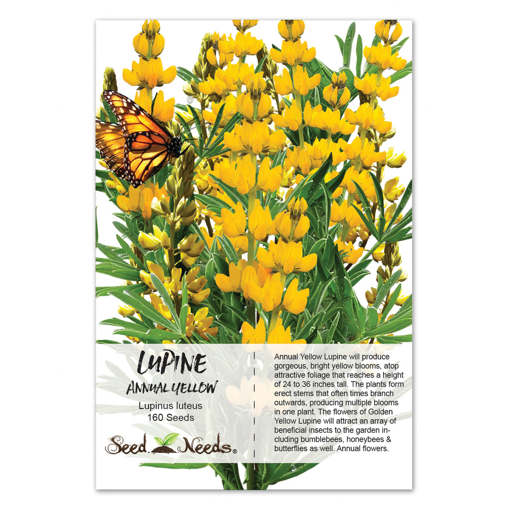 How to plant lupine seeds - Annual Yellow Lupine Annual Yellow Lupine Seeds Lupinus Densiflorus Aureus