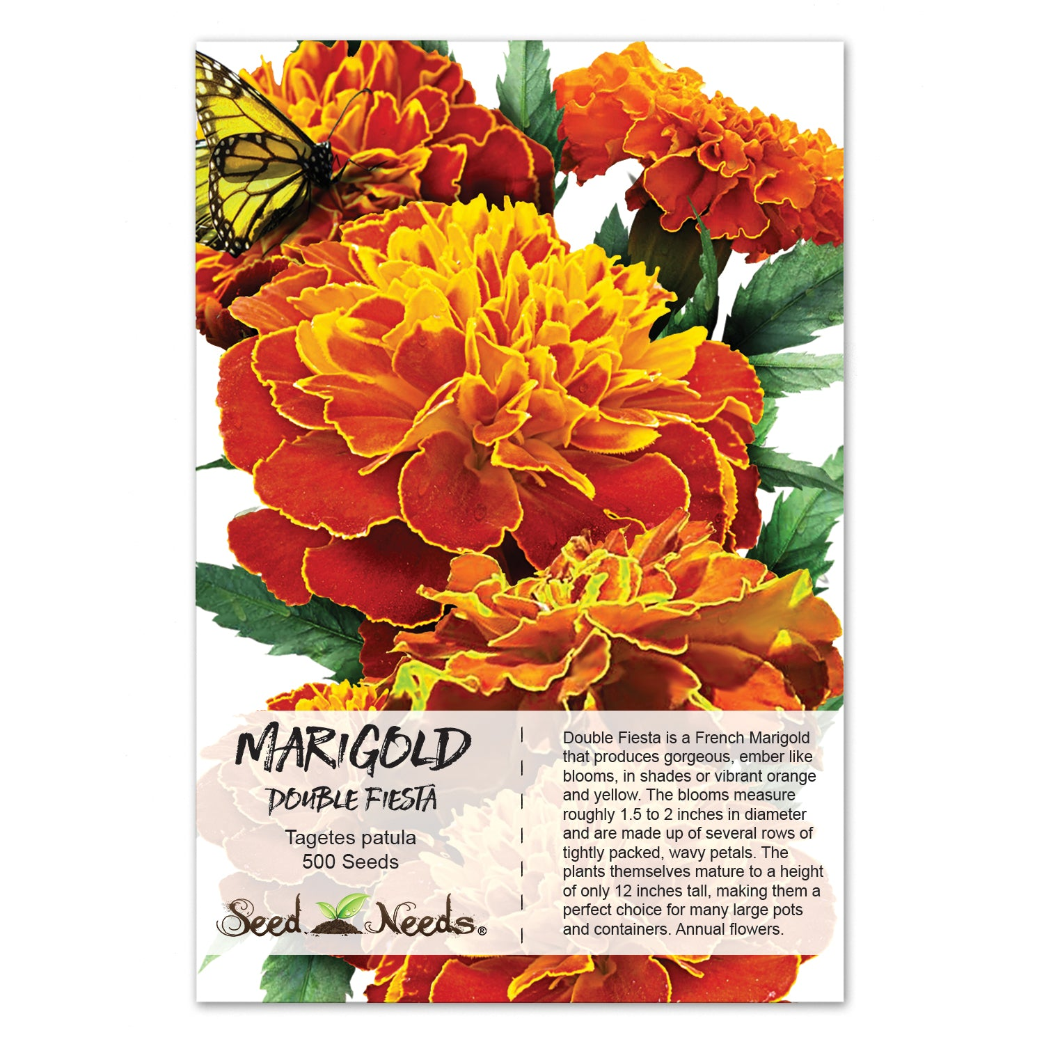 Double Fiesta French Marigold Seeds (Tagetes patula)