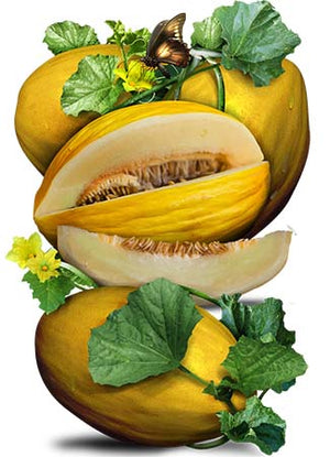 Canary Melon Seeds (Cucumis melo)
