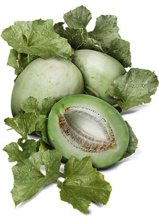 Green Honeydew Melon Seeds (Cucumis melo)