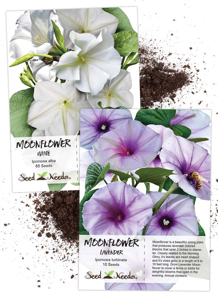 Moonflower Seed Duo