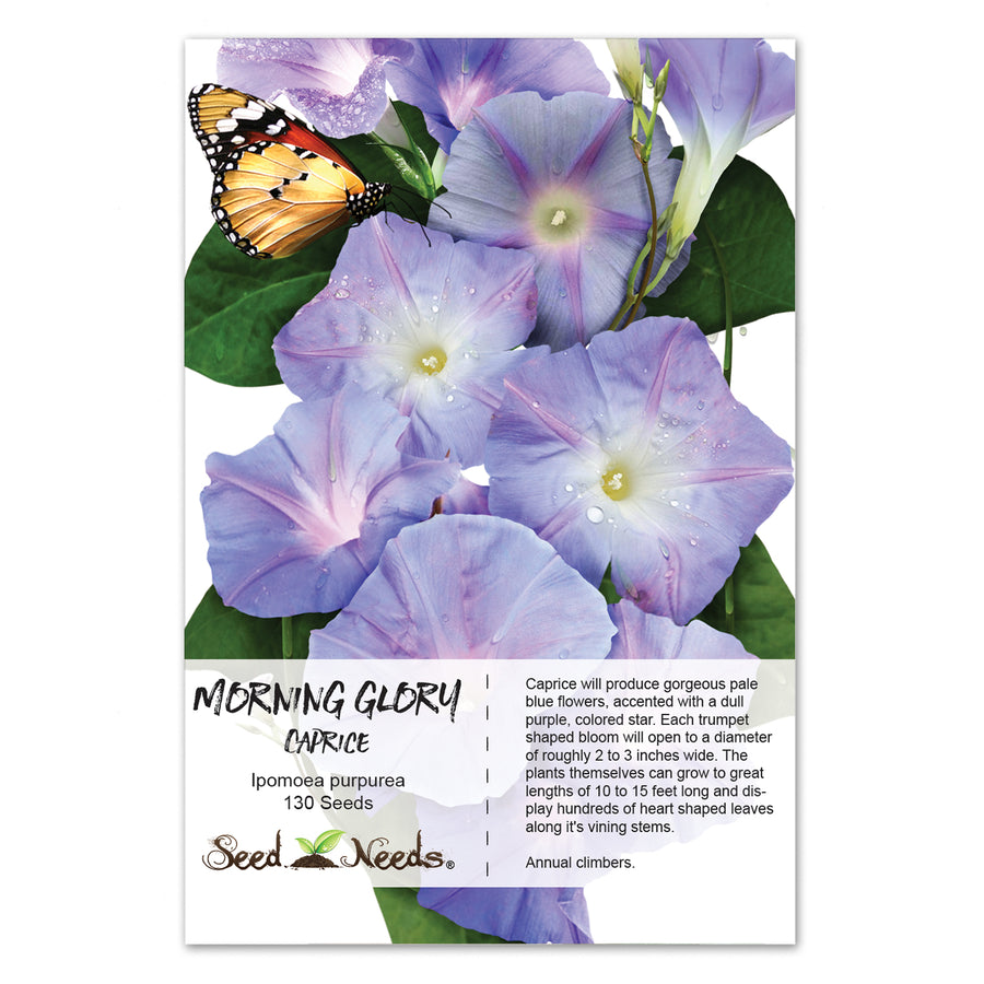 Caprice Morning Glory Seeds (Ipomoea purpurea)
