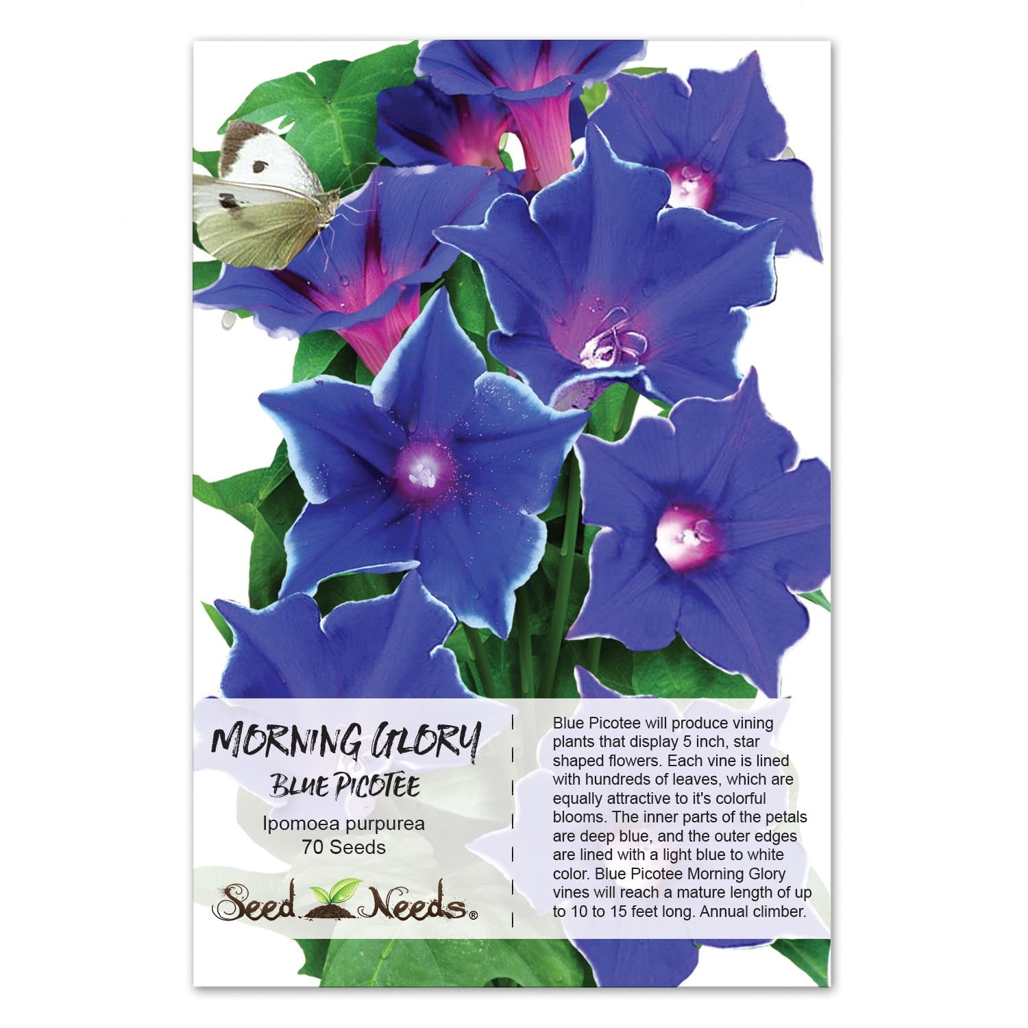 Blue Picotee Morning Glory Seeds Ipomoea Nil