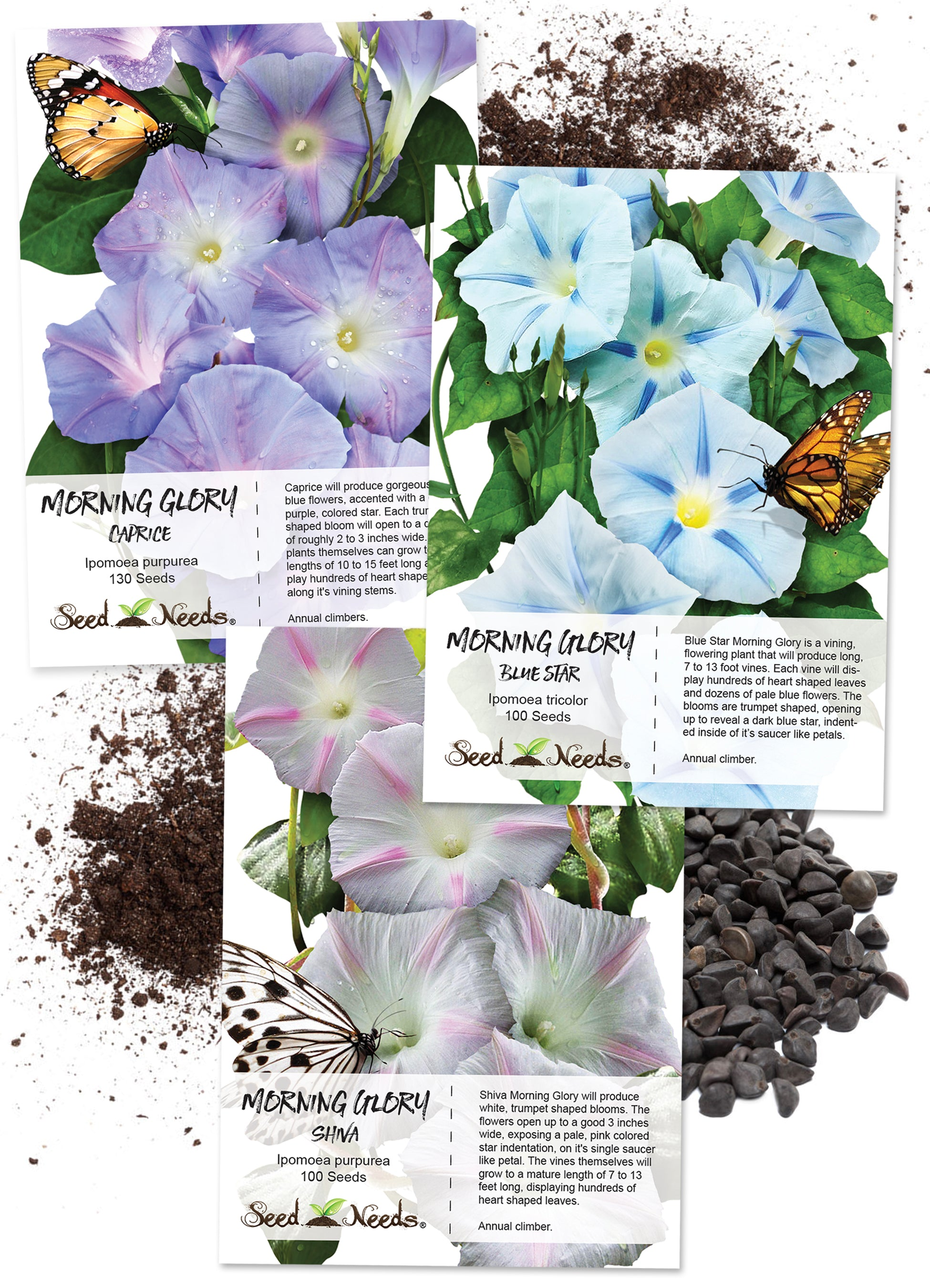 Pastel Colors Morning Glory Seed Collection - Seed Needs