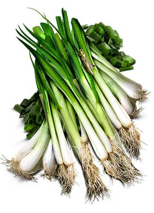 Tokyo Long White Bunching Onion (Allium cepa)