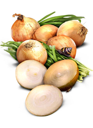 Yellow Sweet Spanish Onion Seeds (Allium cepa)