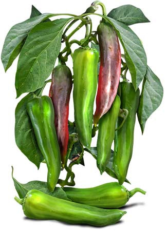 Anaheim Chili Pepper Seeds