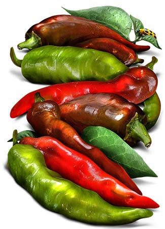 Thick Cayenne Hot Pepper Seeds (Capsicum annuum)