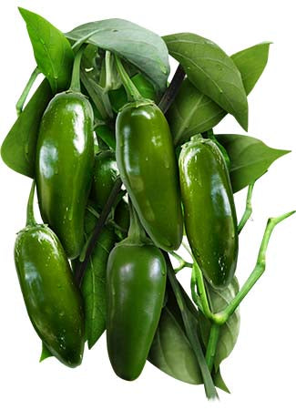 Jalapeño M Hot Pepper Seeds (Capsicum annuum)