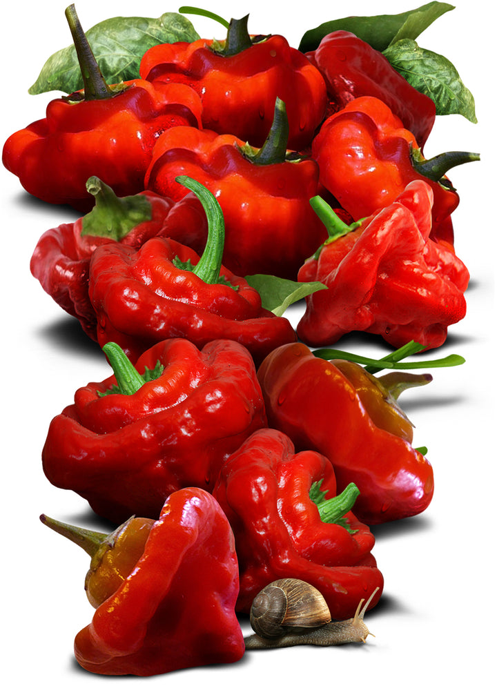 Jamaican Red Pepper Seeds
