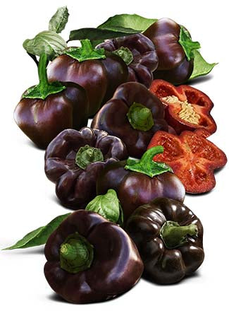 Miniature Chocolate Bell Pepper Seeds (Capsicum annuum)