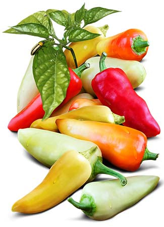 Santa Fe Grande Hot Pepper Seeds (Capsicum annuum)