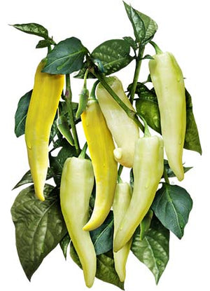 Sweet Banana Pepper Seeds (Capsicum annuum)
