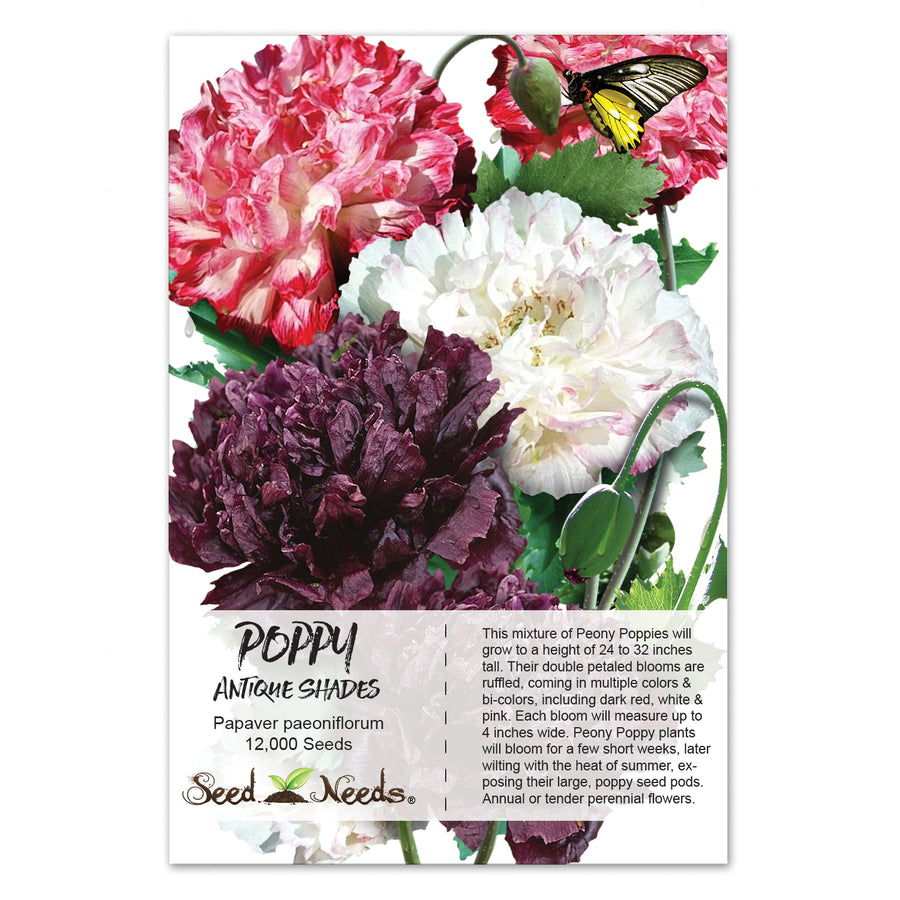 Antique Shades Peony Poppy Seeds