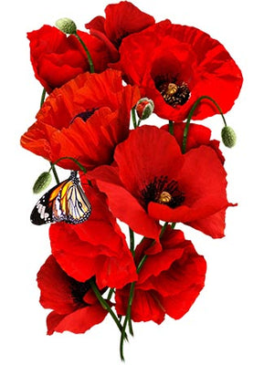Corn poppy seeds red poppy papaver rhoeas mightylinksfo
