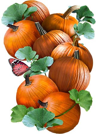 Connecticut Field Pumpkin Seeds (Cucurbita pepo)