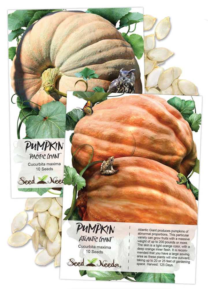 Giant Pumpkin Seed Duo