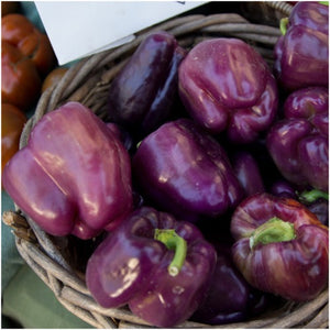 purple beauty bell pepper