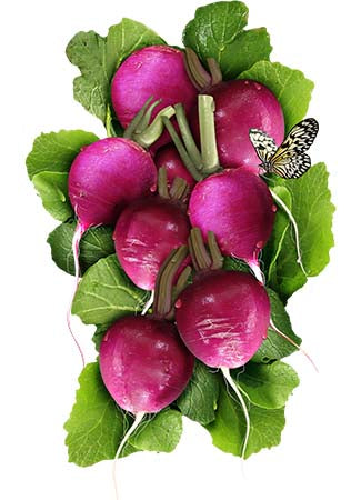 purple plum radish seeds