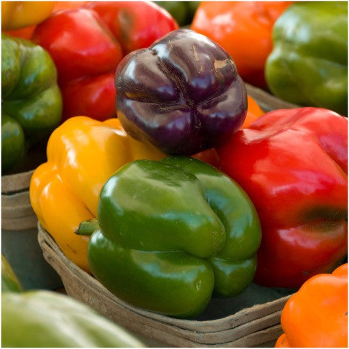 Rainbow Bell Peppers