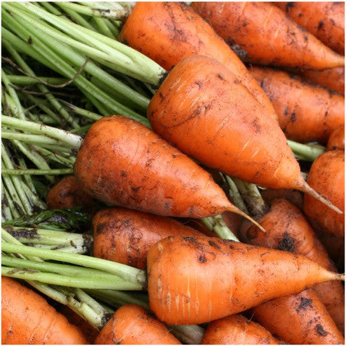 red core chantenay carrot