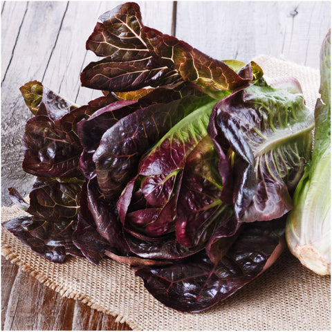 Red Romaine Lettuce