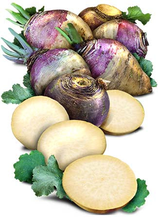 Purple Top Rutabaga Seeds (Brassica napus)
