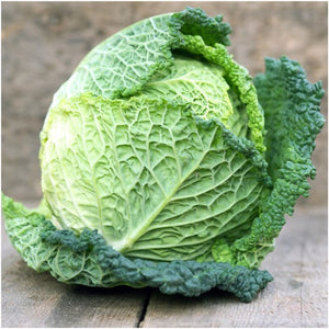 savoy perfection cabbage