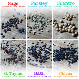Culinary Herb Seed Assortment (12 Individual Seed Packets)
