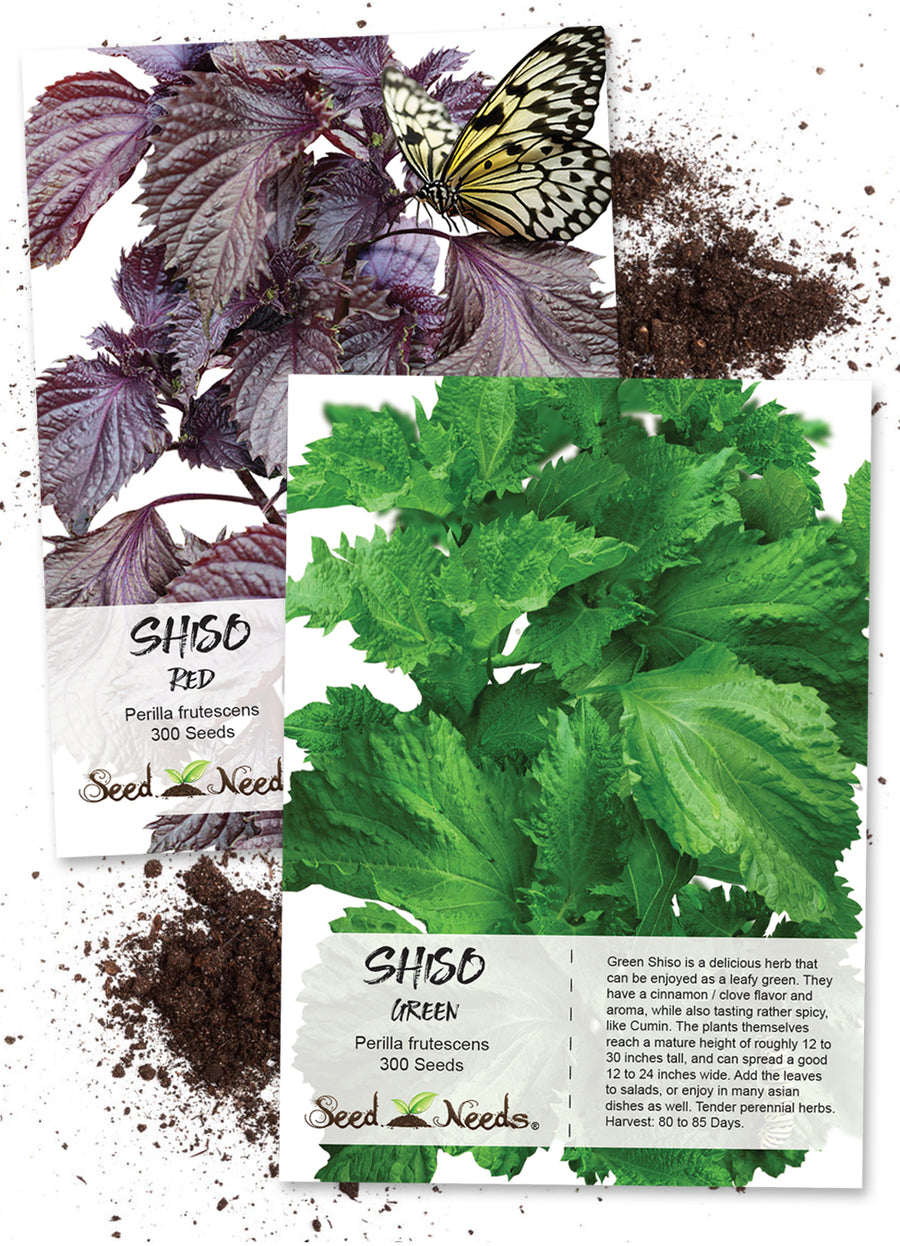 shiso seed collection