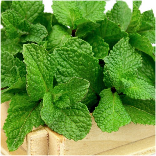 Spearmint herb