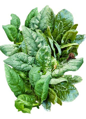 Giant Nobel Spinach Seeds (Spinacia oleracea)