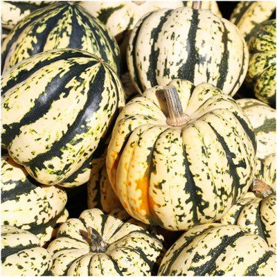 Winter Squash Seeds